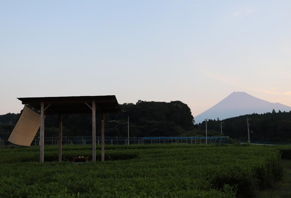 富士山まる茂茶園(後編)