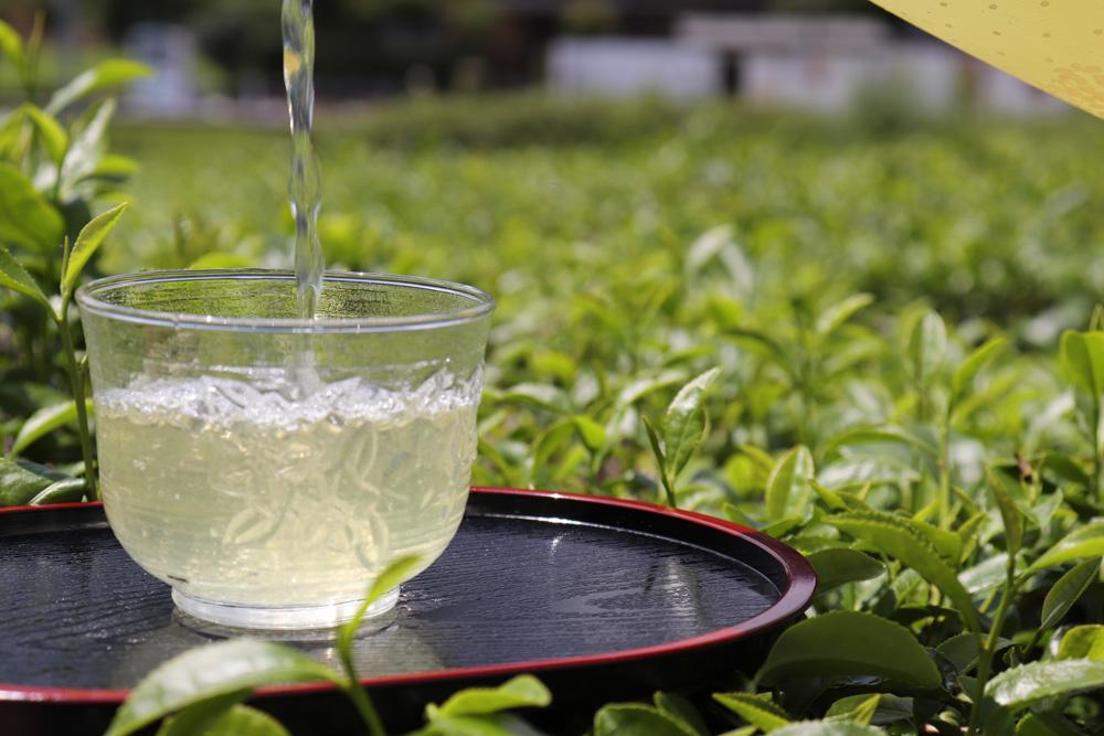 静香農園の川根茶の魅力と希少な高級茶の行方【静岡県・川根茶】